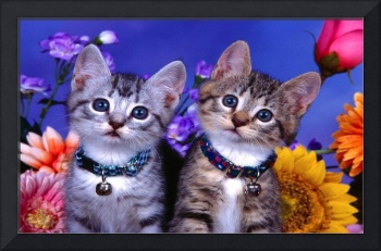 Cute Kittens With Bells