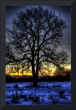 The Field Tree HDR