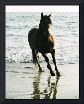 Waters Edge Andalusian