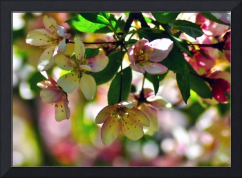 Crab Tree Bokeh
