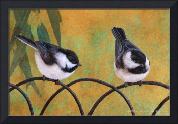 old wire fence chickadees