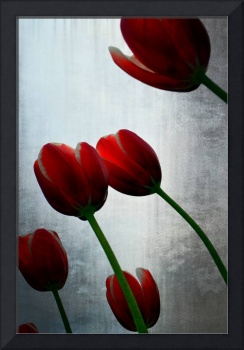 Red Tulips and Grey Sky