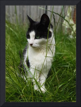 Black and White cat in long grass.