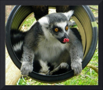 Lemur Playing