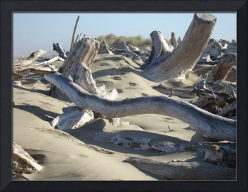 Driftwood Sandy Shore Ocean Coastal art prints Lan