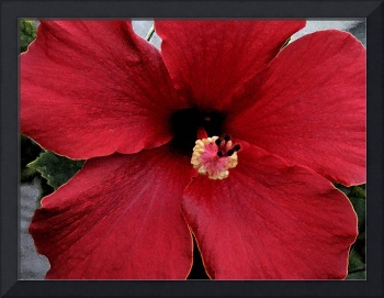 Hibiscus Ruby