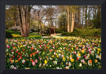Colorful World of Keukenhof. Motley Flower Beds 1