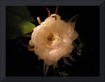 Flower of the night 01