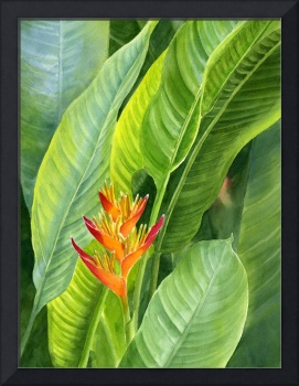 Red and Gold Heliconia with Background