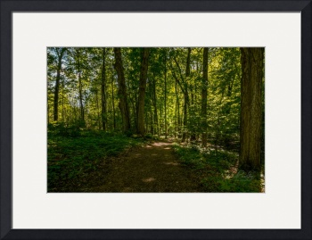 Sacred Grove Late Spring by D. Brent Walton