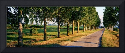 Tree Lined Road Brittany France