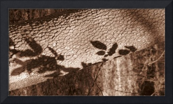 leaf shadows on tree trunk