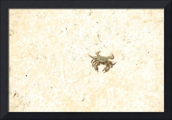 Baby crab Italy