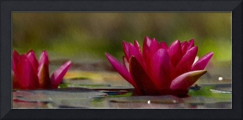 Water Lily - ID 16235-220248-4550