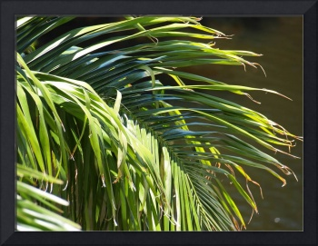 Close-up of a Palm Frond
