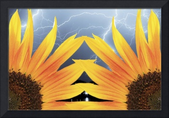 A Two Sunflower Lightning Storm