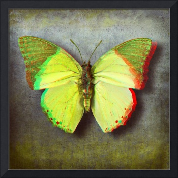 3D Anaglyph-African Mint Green Butterfly