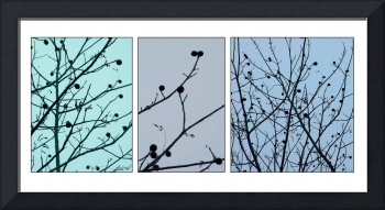 Winter Walnuts Triptych