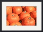 Pumpkin Patch 0188 by Jacque Alameddine