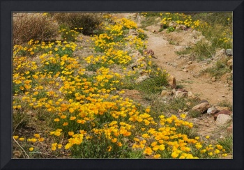 Poppies at El Paso Archeological Museum