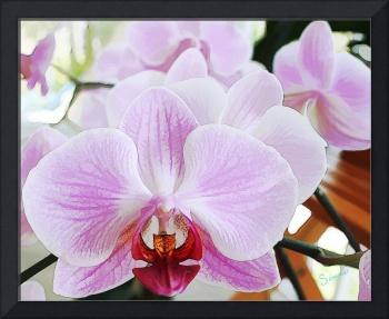 Babe's orchids 2