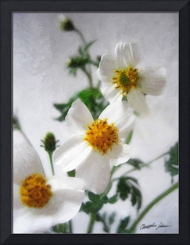 Little White Wildflowers 2