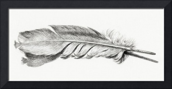 Vintage Feather Etching