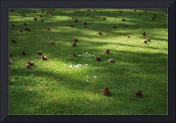 cones on the lawn