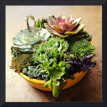 Salad Bowl of Succulents
