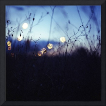 Long wild grass on summer evening twilight dusk bl