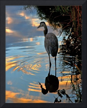 Great Blue Heron Reflections