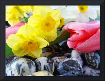 SPRING FLOWERS 28 Pink Tulips Art Narcissus