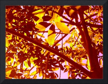 Backlit Tree Leaves 3