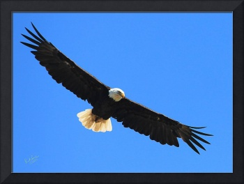 Eagle Flight 2011 3