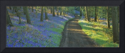 Bluebell flowers along a dirt road in a forest