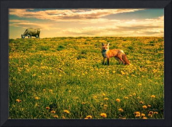 The Fox and The Cow