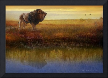savanna reflection african lion