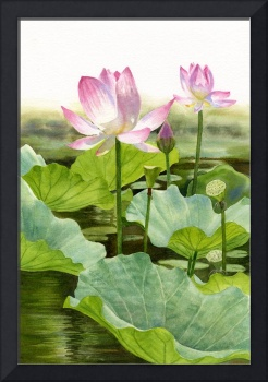 Two Pink Lotus Blossoms with Bud