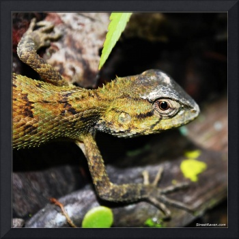 Tree Lizard Eye Close up