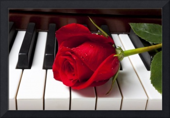 Red rose on piano keys