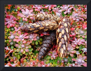 Pine Cone Fine Art Photography Botanical Garden