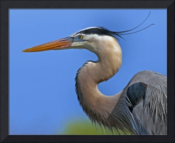 Great Blue Heron  #828