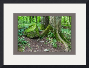 Sacred-grove-tree-roots-and-rock by D. Brent Walton