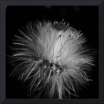Seed Head ll March 2014