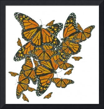 Monarch Butterflies - Migration
