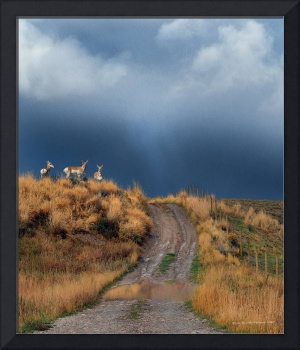 side road with pronghorn idaho