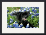 Windy Day on the Bluebonnet Trail 8803 by Jacque Alameddine