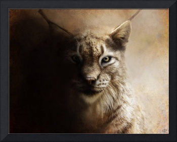 Canadian Lynx Portrait