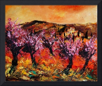 Blooming cherrytrees in provence  France