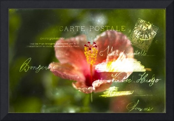 Hibiscus plant post card